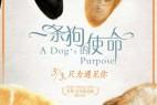 一条狗的使命.A.Dogs.Purpose.2017.1080p.WEB-DL.DD5.1.H264-中英双字