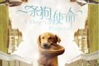 一条狗的使命.A.Dogs.Purpose.2017.1080p.BluRay.x264.DTS-中文字幕