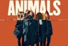 [中英双字]美国动物.American.Animals.2018.1080p.BluRay.x264.CHS.ENG-3.53GB
