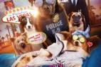 [中英双字]汪星卧底.Show.Dogs.2018.1080p.BluRay.x264.CHS.ENG- 2.64GB