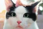 [只有我没有猫][HD-MP4/1.6G][韩语中字][1080P][猫就是我的精神寄托]