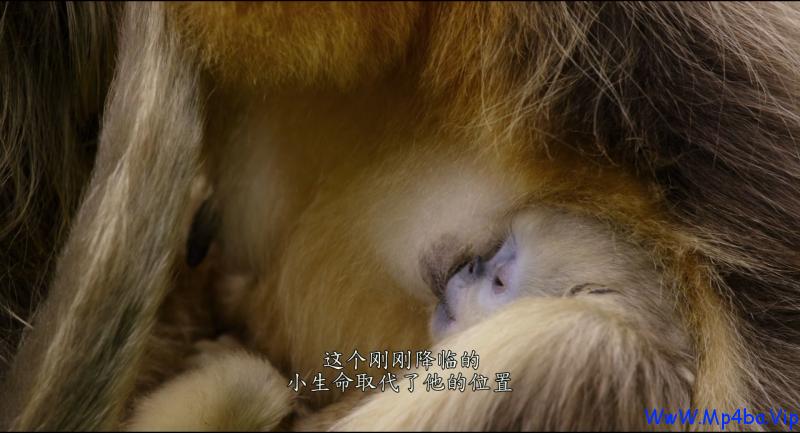 我们诞生在中国.Born.in.China.2016.HD1